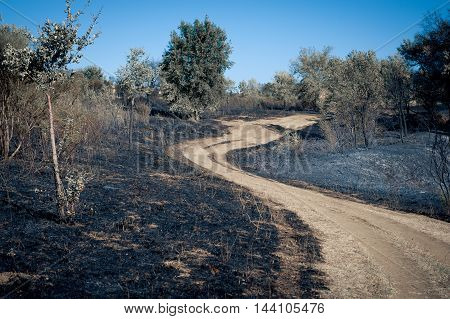 Turning Path Around Scorched Earth