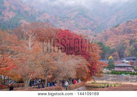 Fujikawaguchiko Yamanashi Japan - November 232015 : Unidentified tourist visiting Maple corridor or Momiji Kairo at autumn in Kawaguchiko Japan.