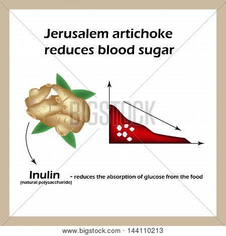 Jerusalem artichoke reduces blood sugar. Infographics. Vector illustration an isolated background.