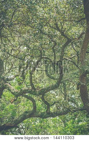 Beautiful abstract image of many tree branches