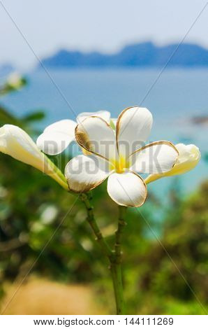 Flora and Sea Tropical Verdure