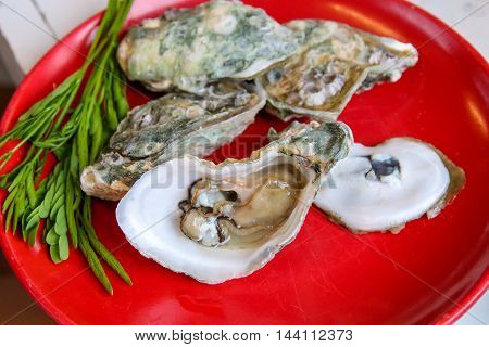 Raw Oysters in a Shell on dish