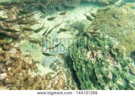 group of coral fish in the sea underwater view