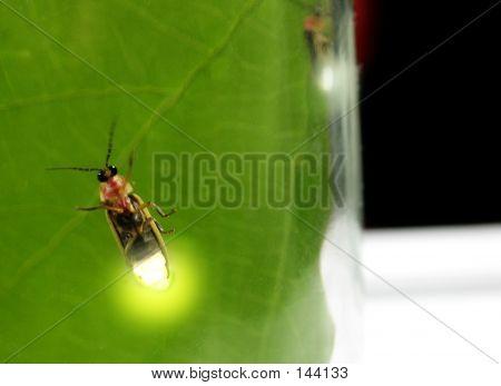 Lightning Bugs In A Jar