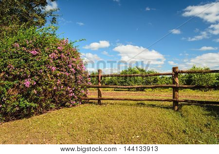 wooden fence and brazilian flower (bougainvillea - primavera)