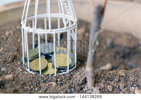 White cage with a stack of Malaysia Coin money inside on vase with dirt and dead plant. Selected focus