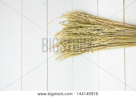Oryza Sativa Or Rice Plant Laying Over White Wooden Background