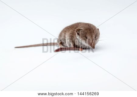 on a white background there is a small shrew and earthworm