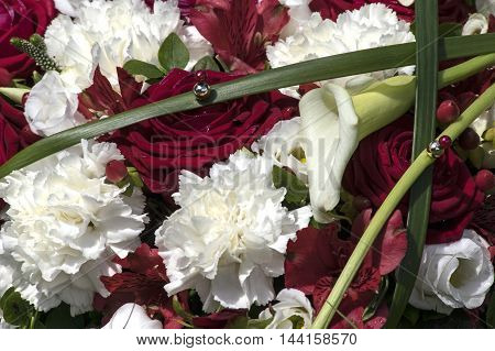 Elegant Bouquet with red roses and White carnation