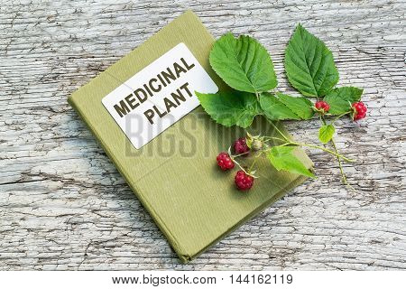 Medicinal plant Rubus idaeus (raspberry red raspberry or occasionally as European raspberry) and herbalist handbook on old wooden table. Actively used in herbal medicine and healthy eating