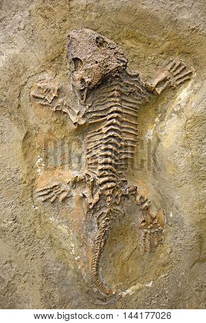 In Limestone well preserved fossilized primeval lizard
