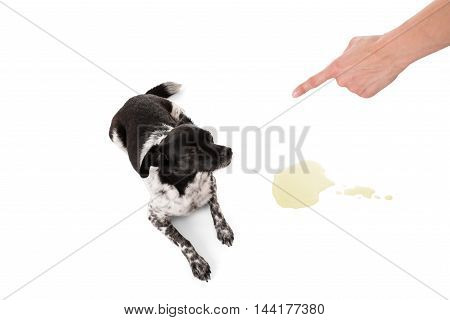 Person Scolding Dog For Urinating On Floor