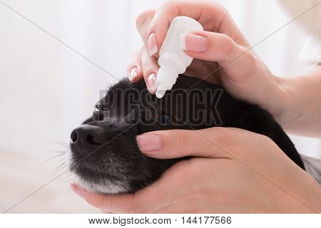 Close-up Of A Vet Applying Eye Drop In Dog's Eye