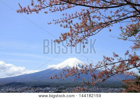Mt. Fuji and cherry blossoms from Arakura yama Sengen park