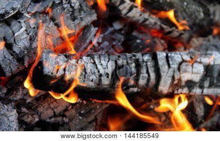 Fire Dances on Burning Logs Close Up Stock Photo