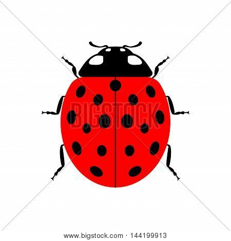 Ladybug small icon. Red lady bug sign isolated on white background. Wildlife animal design. Cute colorful ladybird. Insect cartoon beetle. Symbol of nature spring summer. Vector illustartion