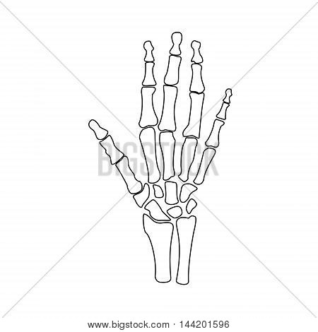 Vector illustration hand bones outline drawing. Orthopedic human hand skeleton icon. Diagnostic center