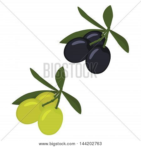 Vector illustration branch of green and black olives with leaves or cooking gastronomy oil and vegetarian design.