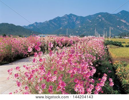 nature Landscape of Korea