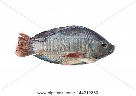 Tilapia And Nile Tilapia, Fresh Freshwater Fish, Isolated On White Background