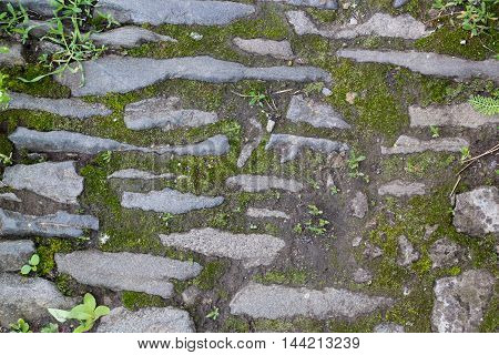 Brick pavement blocks. Cobbled pavement. Green moss on old stone footpath. Road pavement grass green. Moss trying to grow in between cobbled pavement.