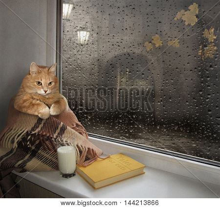 A cat sits on the windowsill. It is wrapped in a blanket. There are a glass of milk and a book next to the cat.