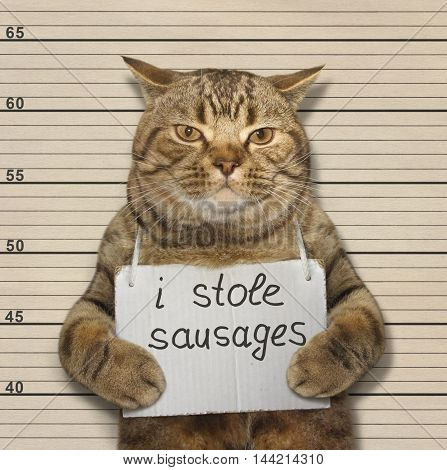 A scottish straight cat was convicted of stealing sausages.