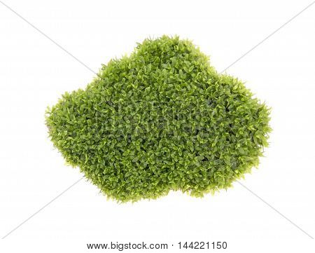 Green moss isolated on white bakground nature