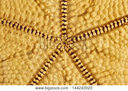 clous up of seastar starfish on a white background