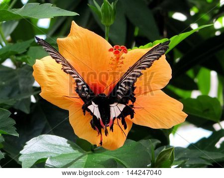 Butterfly Haus on the Island of Mainau in Konstanz Germany located on Lake Constance