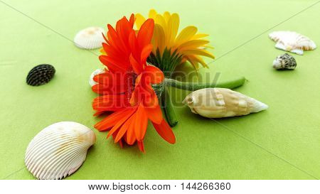 tischdekoration floral and shells on green tablecloth