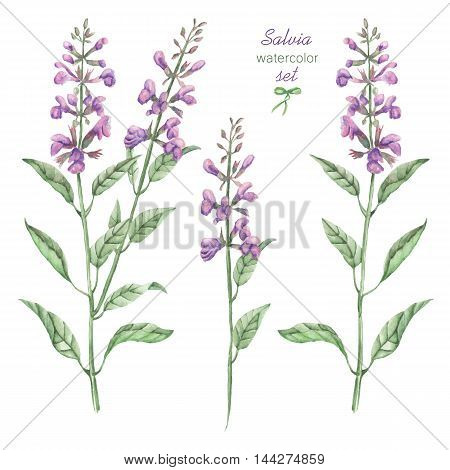 A floral set with the isolated watercolor medicinal salvia flowers, hand drawn on a white background, for self-compilation of the bouquets and ornaments