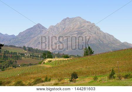 Farm, Stellenbosch, Cape Town South Africa 02c