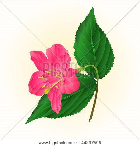 Pink flower decorative shrub Weigela vintage vector illustration