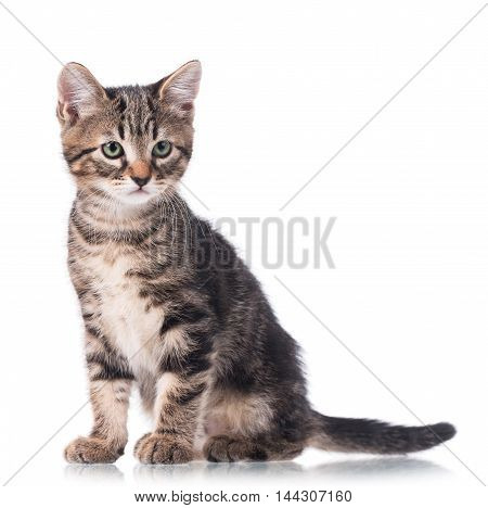 Cute little kitten isolated over white background