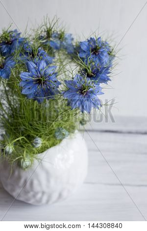 Nigella sativa on a white background blue flowers in a clay vase white earthenware vase with blue flowers.