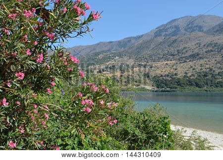 Oleander Flowers at Lake Kournas in Crete