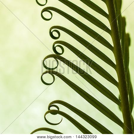 Detail of young spring palm leaves on green background close up