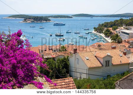 Detail of Hvar city with flower in the foreground