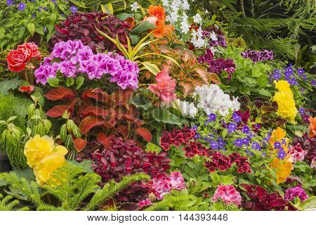 Flower garden in Victoria British Columbia Canada in the summer