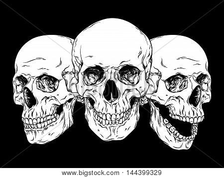 Human Skulls Hand Drawn Line Art Anatomically Correct