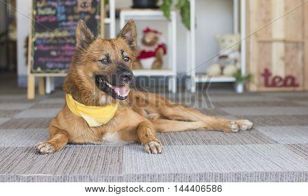 Manner of sleeping dog on  the carpet