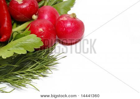 Radish, pepper, parsley and fennel isolated on white