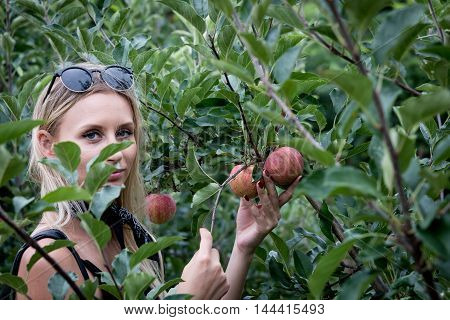 Pick-your-own Apples