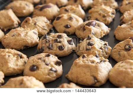 Closeup of chocolate chip cookies on baking tray shot at selective focus.