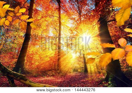Colorful autumn scenery in a forest with the sun casting beautiful rays of light through the red and gold foliage