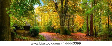 Colorful and tranquil autumn scenery: a panorama of a forest with paths covered in leaves and a small cabin