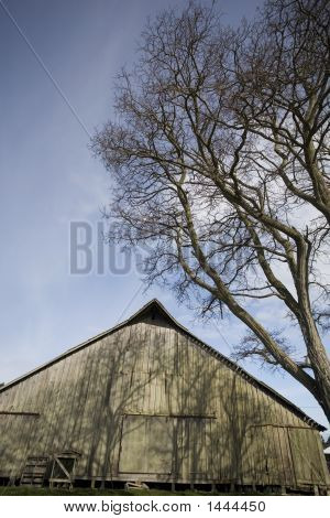 Old Barn And Trees