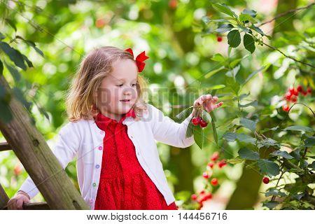 Kids picking cherry on a fruit farm. Children pick cherries in summer orchard. Toddler kid eating fresh fruit from garden tree. Little farmer girl with berry in a basket. Harvest time fun for family