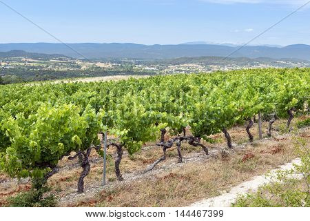 Landscape with vineyard in Var (Provence-Alpes-Cote d'Azur France) at summer